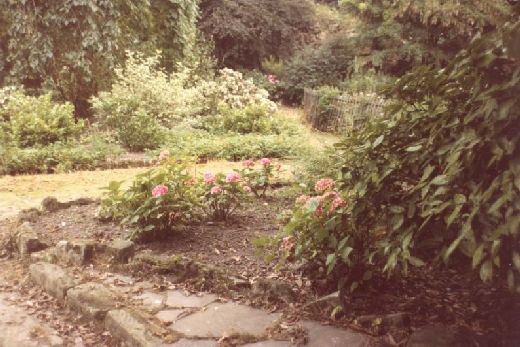 Looking south on the terrace towards the keep which is completely masked by a mature tree and many shrubs. This view illustrates why the consolidation programme of 1984-5 also included the removal of most of the Victorian park features which were overgrown and prevented visitors from seeing much of the exposed archaeology. The photo was taken to record the change [Click here to open image in popup]